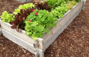 PRODUCTS_RAISED_BEDS_main